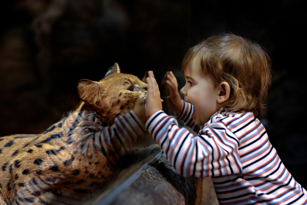 baby looking at animal at the zoo